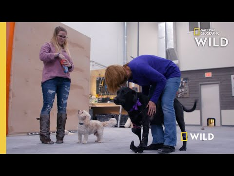 A Dog Tries on a Prosthetic Leg | Wizard of Paws