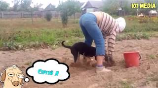 Смешные Собаки 2018 Смешные Приколы с Животными Приколы с Собаками Funny Dogs Compilation 2018 VIDEO