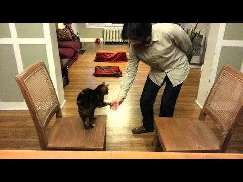 kedi egitilir mi? :)