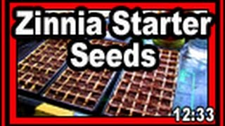 Zinnia Starter Seeds - Wisconsin Garden Video Blog 686