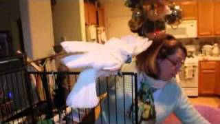 Woman and Cockatoo argue over stuff