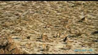 Охота BULAT-M Кыргызстан