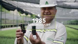 Vídeo Institucional Cementos Progreso 2020