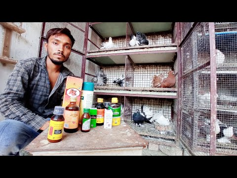 , title : 'Pigeon in Khandwa || Medicine for pigeon || Basic medicine to keep your pigeon healthy