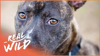 Rescue Dogs Can Be Stars Too! | For The Love Of Dogs | Wild Things Shorts