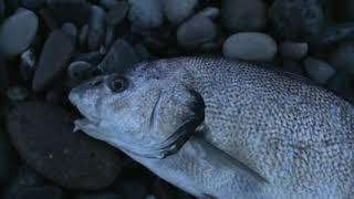 Рыбалка зимняя на чёрном море