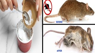 How to Kill Rats With Baking Soda is Fast Acting Remedy - Get Rid of Rats Naturally at Home