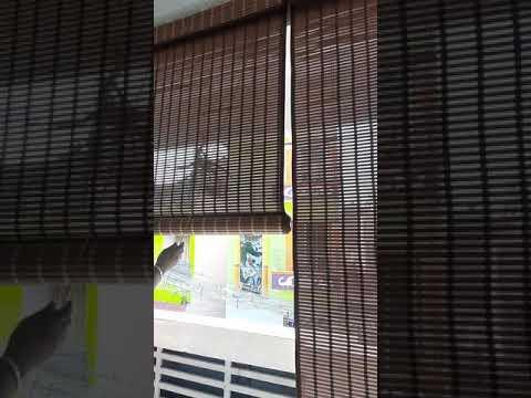 Balcony Blind