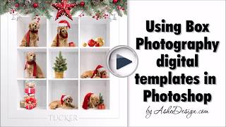 Using Box Session Photography Templates