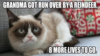 Top 10 Funny Cat Pictures With Captions - Funny Cat Memes