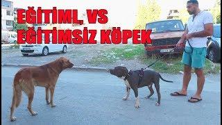 TRAINED VS DOG WITHOUT TRAINING