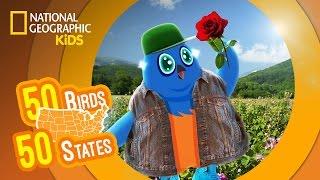 New York - Feat. Rapper MC Blue the Eastern Bluebird | 50 Birds, 50 States