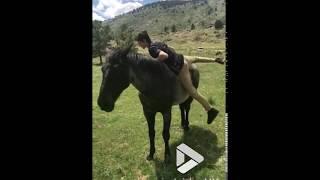 animale cade de pe cal