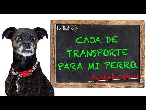 Caja de transporte para perros, como usarla.