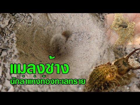 Trematodes เวิร์มแบน