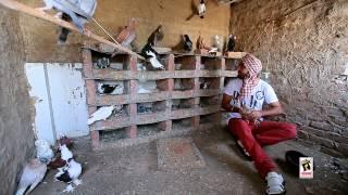 Ravinder Grewal  Tota Maina  Punjabi Doze  Brand New Song 2013