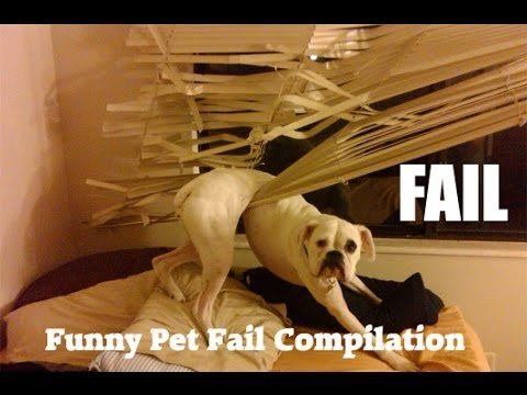 Funny Pet Fail Compilation 2014