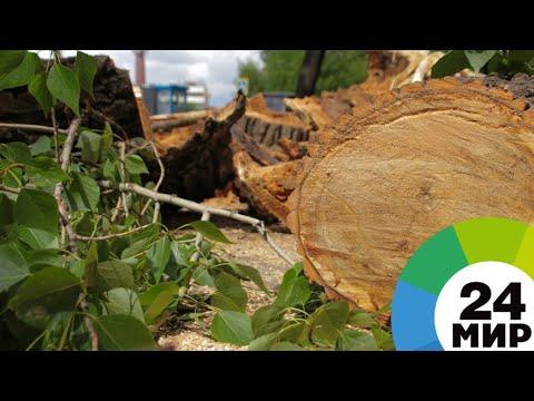 Дефицит кислорода: Бишкек страдает от вырубки деревьев