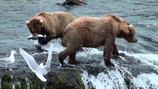 Bears at Brooks Falls - Katmai National Park