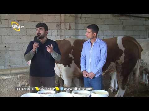 , title : 'Etten Süte  - Büyükbaş Hayvan Irkları ve Yemleri