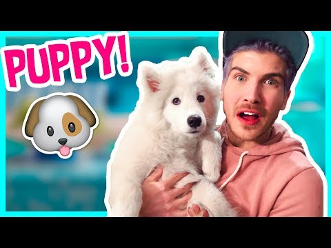 WE'RE GETTING ANOTHER PUPPY!?