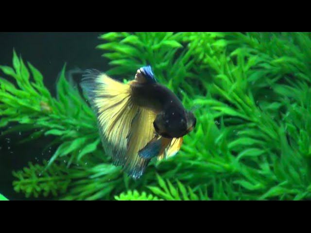 Betta Fish Tank - 2 Months After Adding Fish