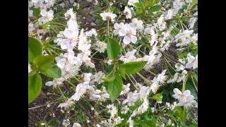 И.С.Бах и Природа, прекрасная музыка. Toccata in D minor.