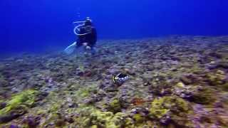 preview picture of video 'Dive at Kumejima, Okinawa on December 28th, 2014 with GoPro Hero3 Black Edition(1/2)'