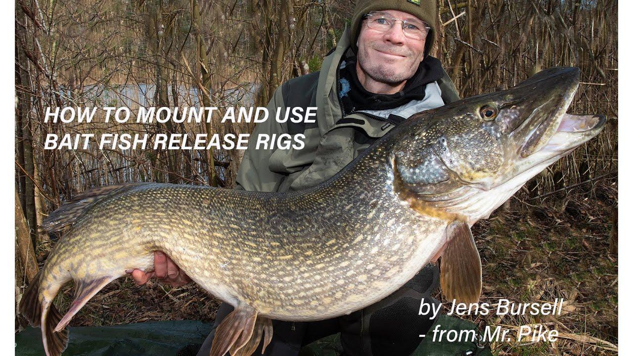 NY VIDEO: Sådan fisker du gedde med agnfisk og releaserigs