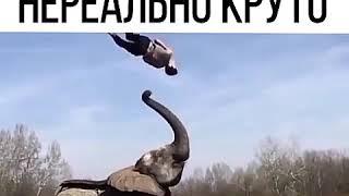 Какая грация)