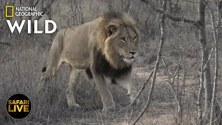 Safari Live - Day 326 | Nat Geo Wild