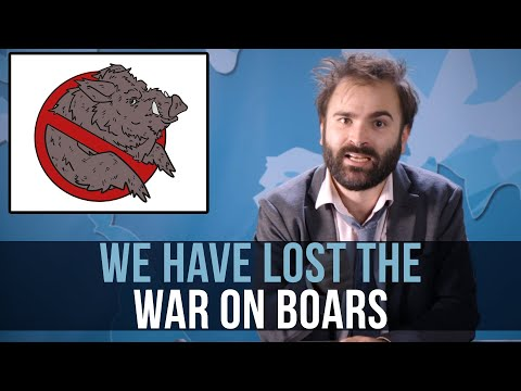 We Have Lost The War On Boars - SOME MORE NEWS