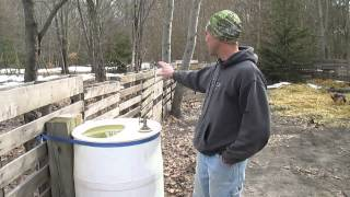 Setting Up an Area For Feeder Pigs