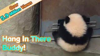 Panda baby hangs on door when it opens and has fun! | Kholo.pk