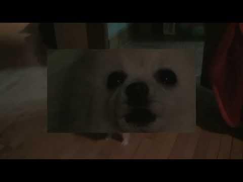 Big Doge (Big Blue doge vidoe)