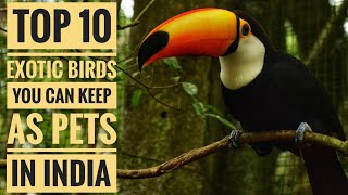 Top 10 Exotic Birds You Can Keep As Pets In India (With Price).| Part - 1