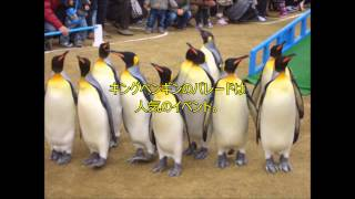 GWの穴場スポット九州編(1)長崎ペンギン水族館 動画キャプチャー