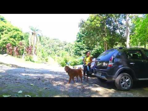 Trilha Pet Camping Tamo Junto