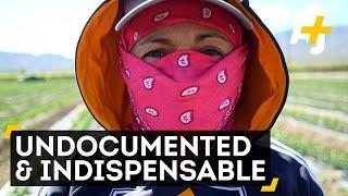 Meet The Undocumented Coachella Farmworkers Feeding America