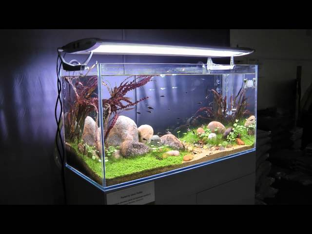 Aquascape by James Findley, The Green Machine: 'Through the Eyes of a Child'