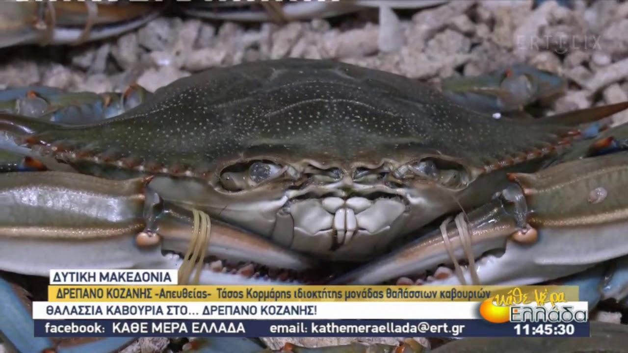 Θαλάσσια καβούρια…στο Δρέπανο της Κοζάνης | 04/12/2020 | ΕΡΤ