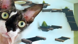 I Turned My Living Room Into A $600 Indoor Custom Cat House || Hannah Hart