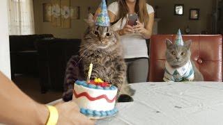 Happy Birthday - Video Youtube