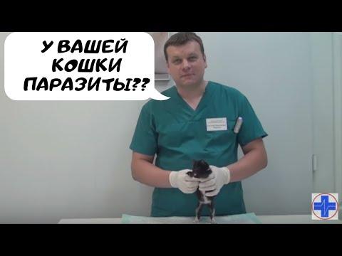 При паразитах лимфоузлы увеличены