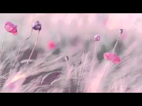"3 HOURS Best Relaxing Music 'Romantic Piano"" Background Music for Stress Relief Therapy Love"