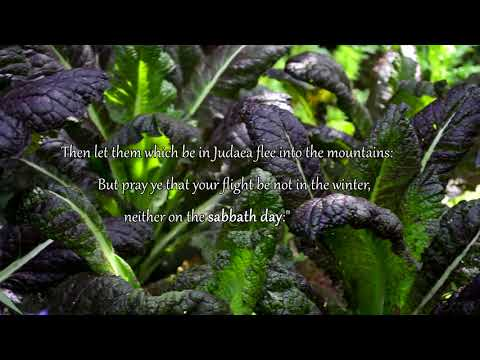 Мусульманская молитва на похоронах слушать