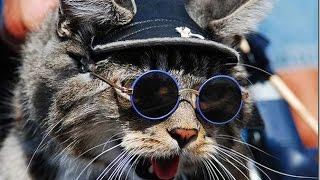 Смешные коты и кошки под веселую музыку. В конце- дискотека! Прикольные видео #14