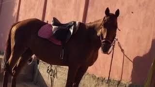 Officina equestre