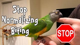 Stop Normalizing Parrot Biting!