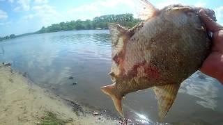 Как ловить донского леща летом на реке